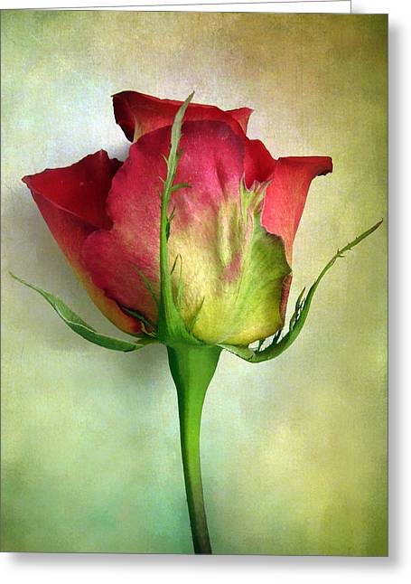 Rose Petals Greeting Cards - Solo Greeting Card by Jessica Jenney