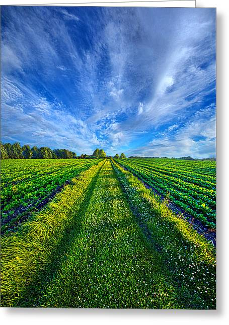 Country Life Greeting Cards - Some Days the Way is Clear Greeting Card by Phil Koch