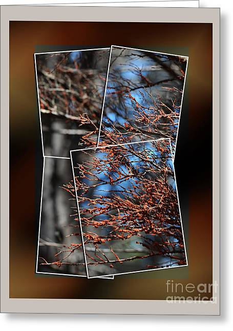 Half Moon Bay Digital Greeting Cards - Some of the Colors of Nature II Greeting Card by Jim Fitzpatrick