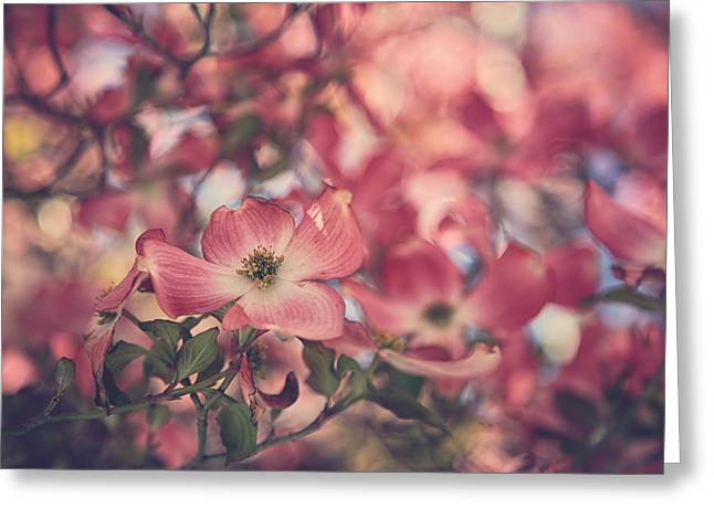Dogwood Greeting Cards - Some Souls Just Shine Greeting Card by Laurie Search