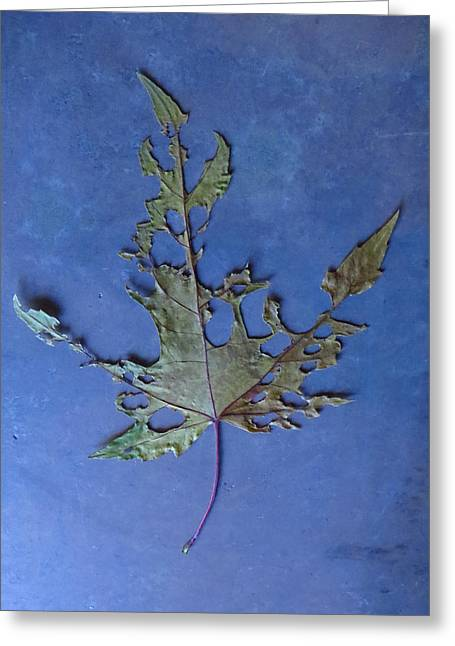 Photo Art Gallery Greeting Cards - Somebody had Leaf for Lunch - Blue Four Greeting Card by Mike Solomonson