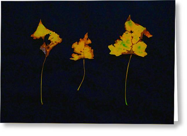 Photo Art Gallery Greeting Cards - Somebody had Leaf for Lunch - Gold on Black Greeting Card by Mike Solomonson