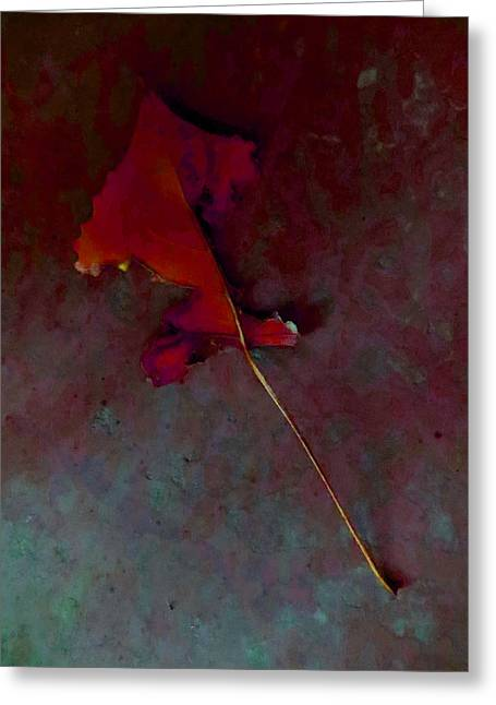 Photo Art Gallery Greeting Cards - Somebody had Leaf for Lunch - Red Greeting Card by Mike Solomonson