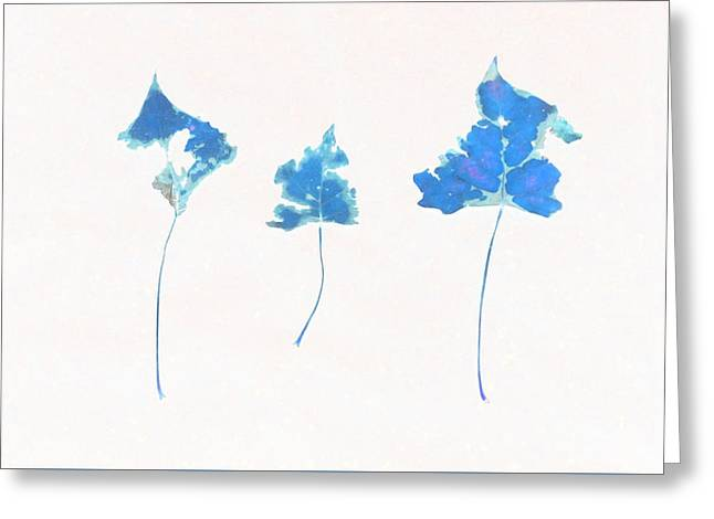 Photo Art Gallery Greeting Cards - Somebody had Leaf for Lunch - Trio of Blue Greeting Card by Mike Solomonson