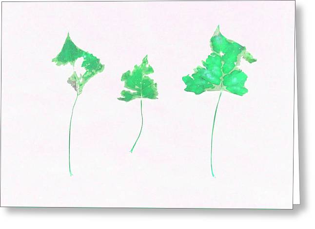 Photo Art Gallery Greeting Cards - Somebody had Leaf for Lunch - Trio of Green Greeting Card by Mike Solomonson