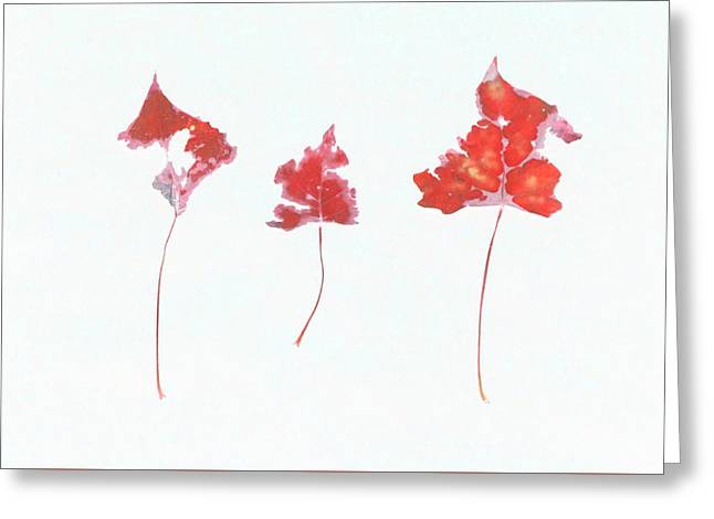 Photo Art Gallery Greeting Cards - Somebody had Leaf for Lunch - Trio of Red Greeting Card by Mike Solomonson