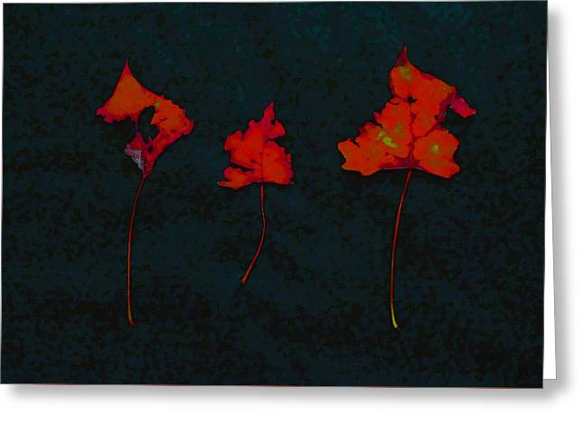 Photo Art Gallery Greeting Cards - Somebody had Leaf for Lunch - Trio of Red on Black Greeting Card by Mike Solomonson