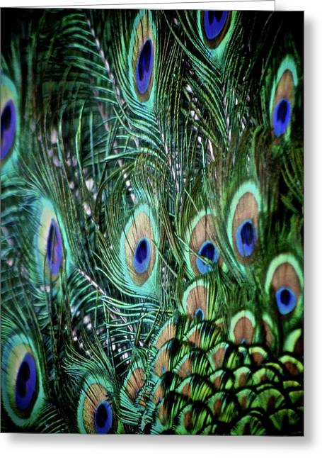 Tail Feather Greeting Cards - Someone Is Watching You Greeting Card by Odd Jeppesen