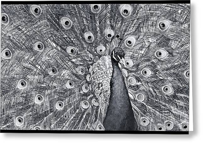 Popular Art Greeting Cards - Something You Dont See Everyday Greeting Card by Geraldine Scull
