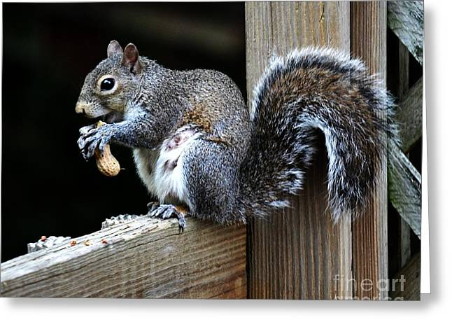 Sometimes You Feel Like A Nut  Greeting Card by JW Hanley