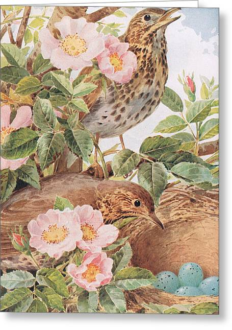 Song Thrushes With Nest Greeting Card by Louis Fairfax Muckley