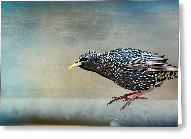 Small Canvas Greeting Cards - Songbird Greeting Card by Heike Hultsch