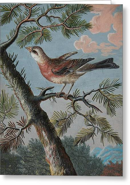 Songbird In An Evergreen Greeting Card by Christoph Ludwig