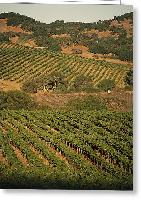 Farmers And Farming Greeting Cards - Sonoma County Vineyards, California Greeting Card by Michael S. Lewis