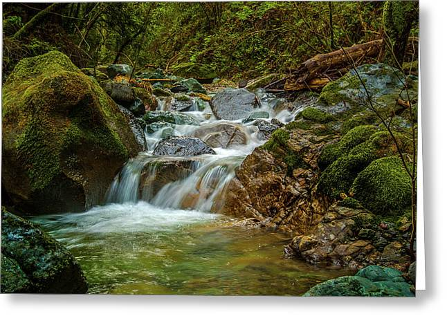 Sonoma Valley Creek Greeting Card by Bill Gallagher