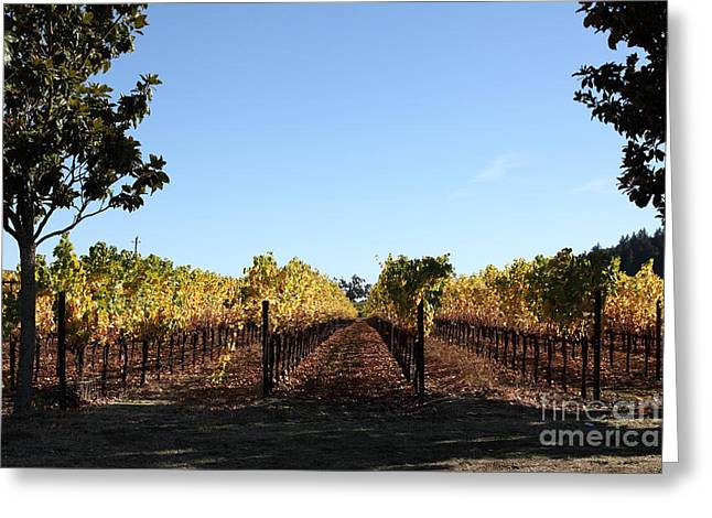 Sonoma Vineyards - Sonoma California - 5d19314 Greeting Card by Wingsdomain Art and Photography