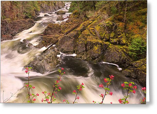 Vancouver Greeting Cards - Sooke Creek Greeting Card by Alan W