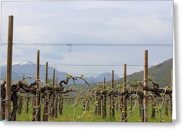 Prosecco Photographs Greeting Cards - Soon will be wine Greeting Card by Natalia Luchinina