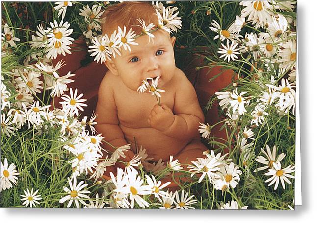 Sophie in Daisy Pot Greeting Card by Anne Geddes