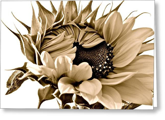Sophisticated Greeting Card by Gwyn Newcombe