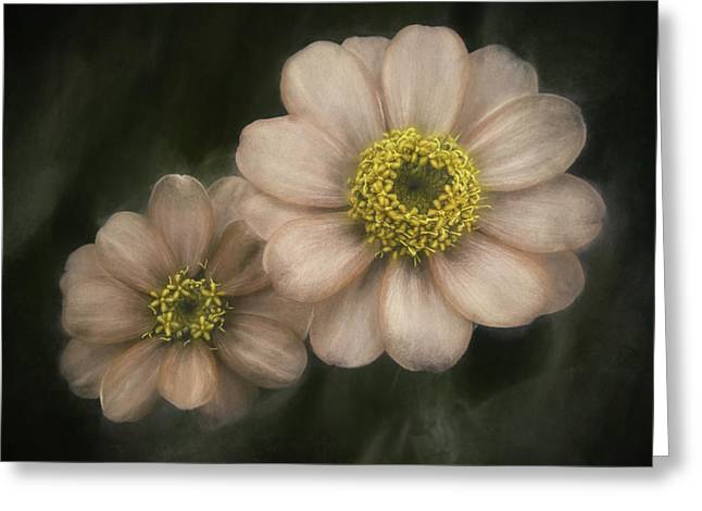 Floral Fine Art Photography Greeting Cards - Soul Mates Greeting Card by Scott Norris