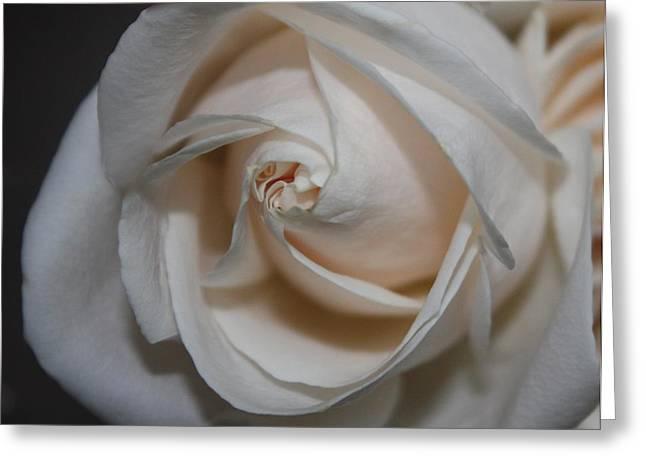 White Pearl Greeting Cards - Soul of a Rose Greeting Card by Nancy TeWinkel Lauren