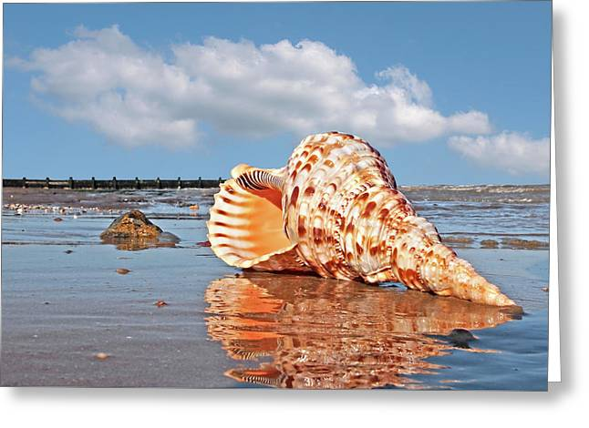 Sounds Of The Ocean - Trumpet Triton Seashell Greeting Card by Gill Billington