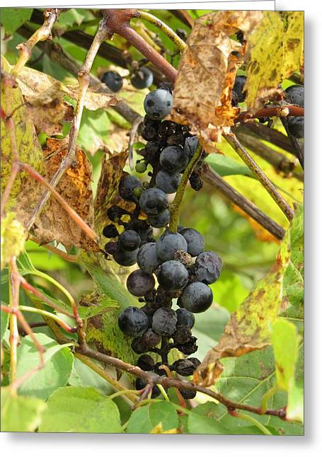 Blue Grapes Greeting Cards - Sour Grapes Greeting Card by Barbara Ebeling
