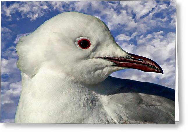 Seabirds Greeting Cards - South African Sea Gull Greeting Card by Anthony Dezenzio