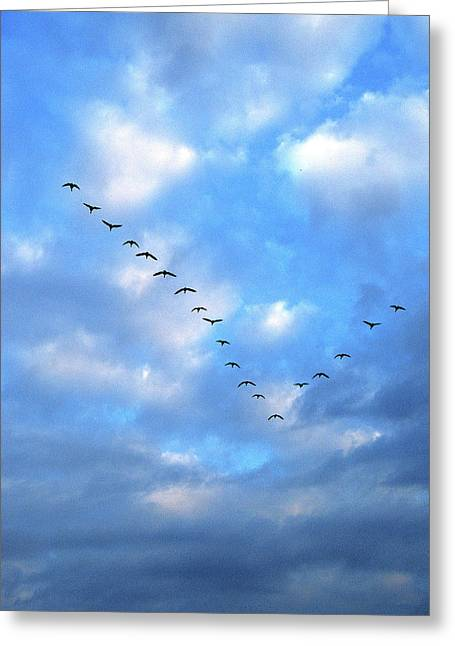 Geese Greeting Cards - South bound 56 Greeting Card by Michael Peychich
