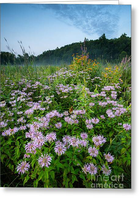 The Nature Center Greeting Cards - South Britain Meadowlands - Wildflowers in Lush Meadow Greeting Card by JG Coleman