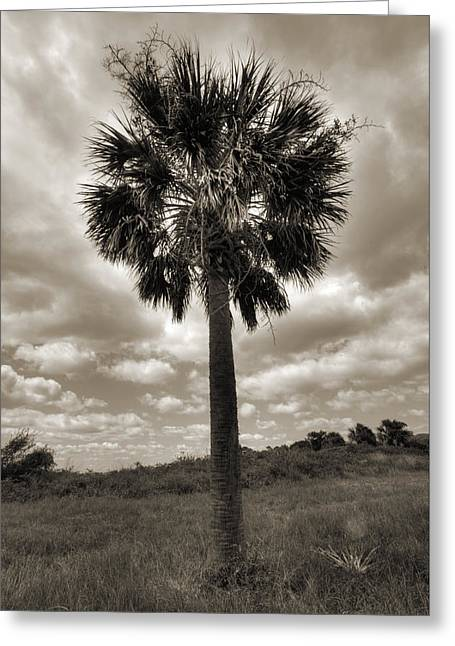 Palmetto Trees Greeting Cards - South Carolina Palmetto Palm Tree Greeting Card by Dustin K Ryan