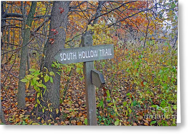 Greeting Cards - South Hollow Trail Greeting Card by Kay Novy