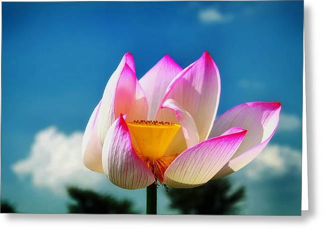 Lotus Seed Pod Greeting Cards - South Korean Lotus Greeting Card by M Ameen