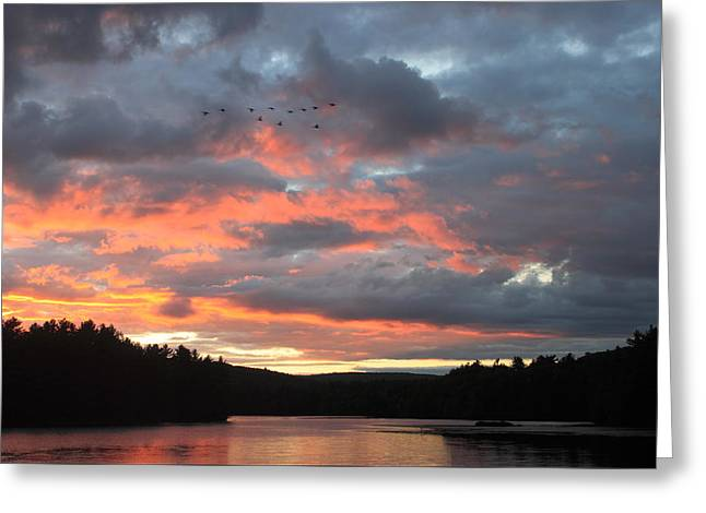 Southbound Geese At Sunset Greeting Card by John Burk