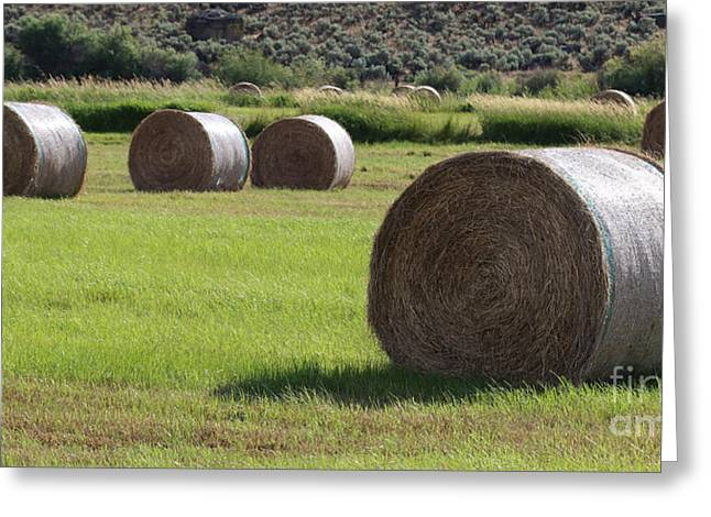 Haybales Greeting Cards - Southeast Greeting Card by Rod  Giffels