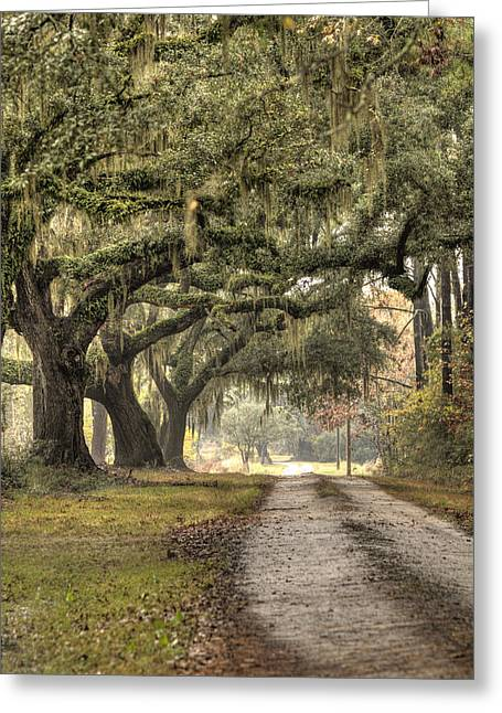 Plantation Greeting Cards - Southern Drive Live Oaks and Spanish Moss Greeting Card by Dustin K Ryan