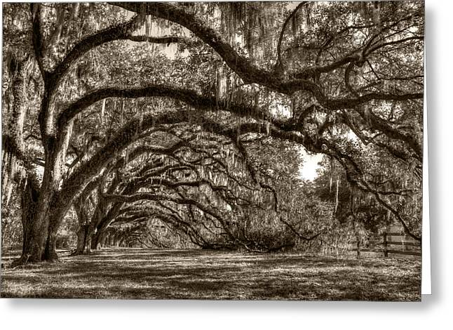 Moss Greeting Cards - Southern Live Oaks with Spanish Moss Greeting Card by Dustin K Ryan