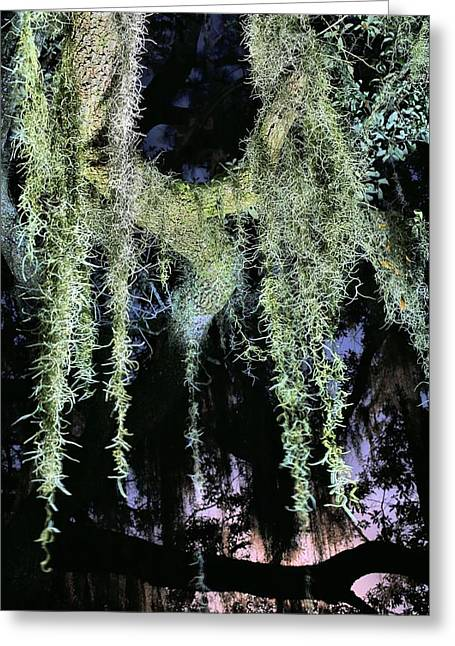 Florida Panhandle Greeting Cards - Southern Nights Greeting Card by JC Findley