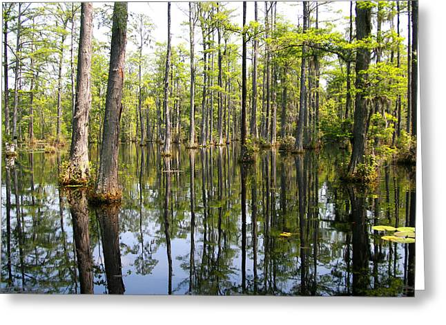 Blue Green Water Greeting Cards - Southern Swamps Greeting Card by Marlana Holsten