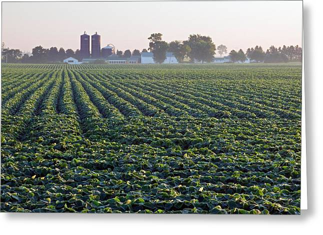 Image Repeat Greeting Cards - Soy Bean Field, Distant Farm Buildings Greeting Card by Panoramic Images