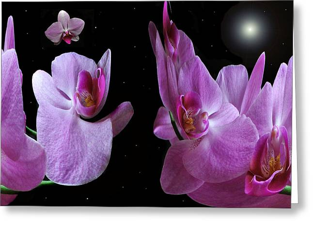 Floral Digital Art Greeting Cards - Space Station Orchid. Greeting Card by Terence Davis