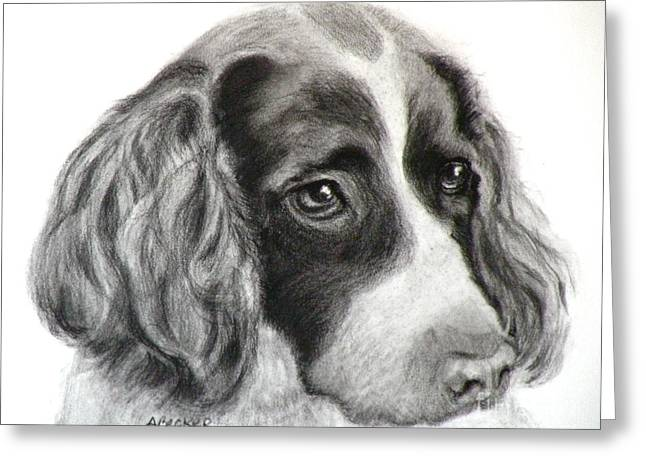 Charcoal Dog Drawing Drawings Greeting Cards - Spaniel Drawing Greeting Card by Susan A Becker
