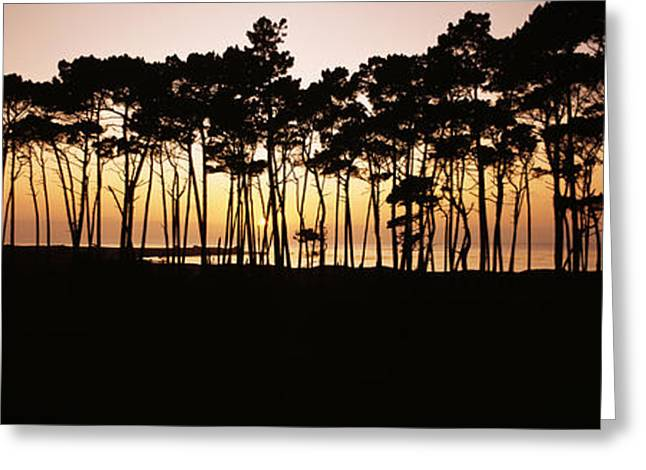 Backlit Greeting Cards - Spanish Bay Tree Line Greeting Card by Bill Schildge - Printscapes
