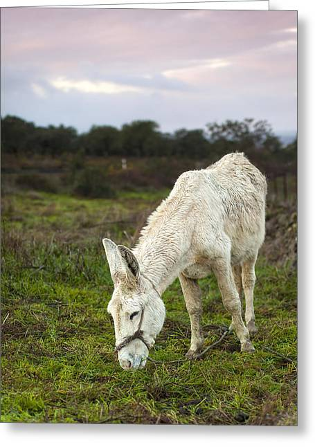 Extremadura Greeting Cards - Spanish Donkey Greeting Card by Andre Goncalves