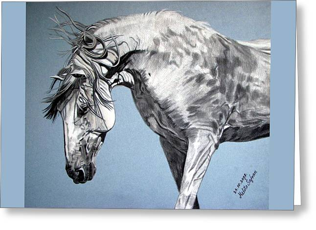 Melita Safran Greeting Cards - Spanish horse Greeting Card by Melita Safran