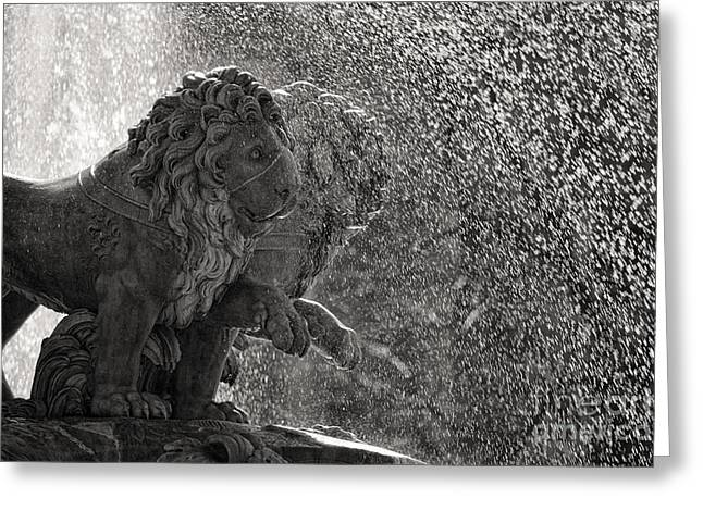 Spanish Lions Greeting Card by Rod McLean