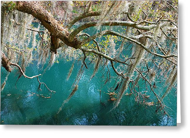Emerald Green Greeting Cards - Spanish Moss and emerald green water Greeting Card by Susanne Van Hulst