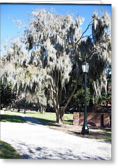 Macrocosm Greeting Cards - Spanish Moss  Greeting Card by Brittany H