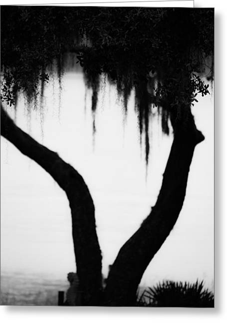 Twosome Greeting Cards - Spanish Moss in Silhouette Greeting Card by Shelby  Young